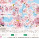 4/2(日) ヒカリノ音色 癒しのスプリングコンサート