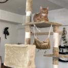 猫かふぇ  ねこぱんち🐾 - 地元のお店