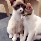 猫かふぇ  ねこぱんち🐾 - 羽島市