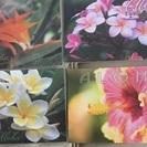 ハワイアン ポストカードセット