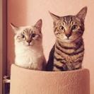 仲良し兄弟、2匹一緒に! アーサー&オスカー
