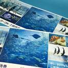 新江ノ島水族館えのすいペア招待券