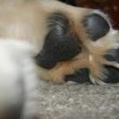 WON ぱんち 蘭越で犬の保護活動ボランティア活動をしています。一...