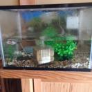 金魚&水槽