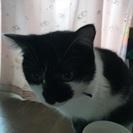可愛いブチ猫です。