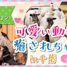 【男性からも女性からも大人気イベント】4/16(日)マザー牧場で...