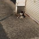 キャリア猫オス1~3歳懐っこい子です!ワンコと同居可能! - 君津市