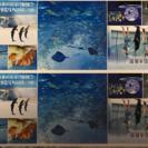 新江ノ島水族館チケット 2枚セット