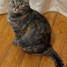 15歳のメス猫です。