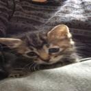 小さな子猫の家族になってください。