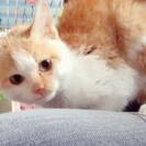 子猫ちゃんの方は、里親さん見つかりました!ミケ猫ちゃんのみ