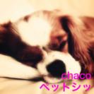 chacoペットシッター