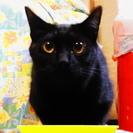 トライアル中です。すらり長い尾の黒猫 (他猫との協調性有)