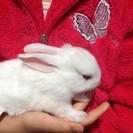 ウサギの赤ちゃん、飼ってくださる方へ。。。