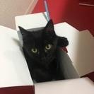 生後半年の黒猫 男の子です