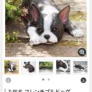 犬の置き物、フレンチブルドック