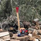 薪用の木を探しています。
