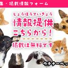 沖縄限定のペット募集サイトができました!