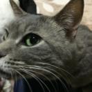 かなりなつっこい可愛い猫ちゃん