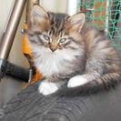 かわいい子猫3匹里親募集です。