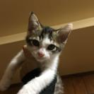 生後2ヶ月の子猫、里親募集