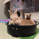 子ウサギちゃん達を可愛がって!