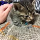 三月16日産まれの子猫です。