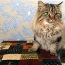 保護猫 里親募集です。オス 年齢不詳。長毛。