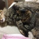 2匹の猫ちゃん 代理投稿