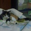 里親に出された愛猫を探しています