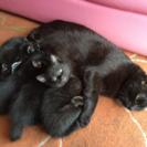 母猫&子猫ちゃん1匹も一緒に里親さんが見つかり家族に迎えてもらえま...