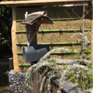 庭作り・ウッドデッキ、フェンス・外構工事【お見積り無料】