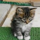 可愛い子猫3匹の里親募集です。