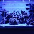 海水水槽用品 ライブロック マガキガイ ヤドカリ 人工海水元 サンゴ