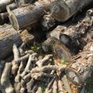 杉の木(切り株、木材、原木)クヌギの木あります