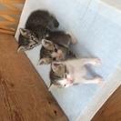 生後1ヶ月の子猫