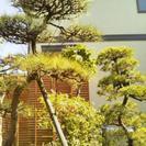 木の剪定、伐採、植栽などお庭の事!