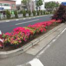 多摩地区 造園 体力自信ある方歓迎 − 東京都