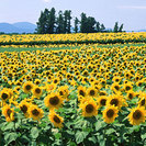 畑で野菜やお花を育てませんか?☆畑を貸します。 千葉県旭市溝原 約...