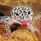 爬虫類〜エキゾチックアニマルまで扱うペットショプ