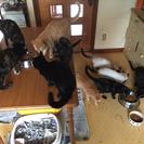 ⚠️多頭飼育のお宅からのSOS。残りの3匹。