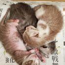 4月24日に生まれた子猫です!