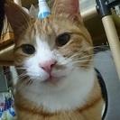 とても綺麗な模様の甘えん坊の茶白猫!