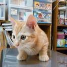 子猫を本気で生涯可愛がってくれる方へ