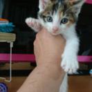 可愛い子猫ちゃんの里親募集❤