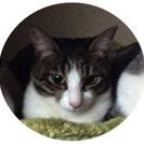 タビちゃん(メス猫1歳半)を探しています。見かけた、保護したという...