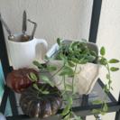 新品 おしゃれな鉢 ホワイト 白 検)多肉植物 観葉植物 グリー...