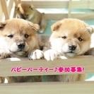 3月21日(木・祝)パピーパーティー参加募集! (子犬のしつけ教室)