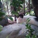 子猫が新しい飼い主さんを探しています(=^ェ^=)