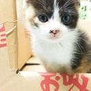 生後1ヶ月くらいのメス2匹です。(2匹とも新しい家族が決まりました) - 猫